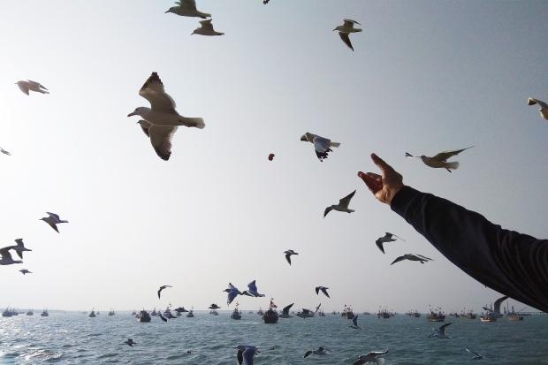 Birds at Okha Port Bet Dwarka