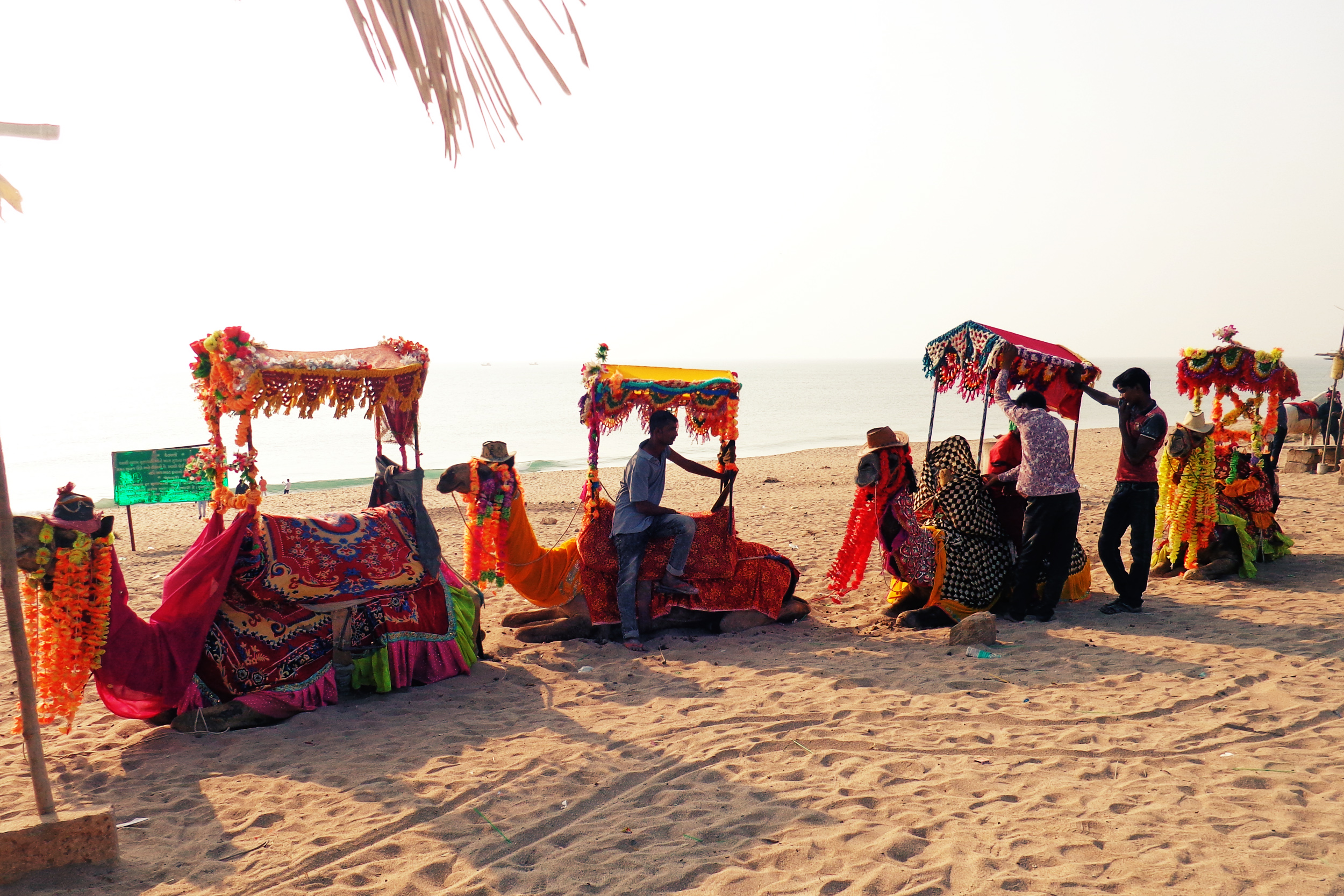 Gujarat Beaches Camel Ride