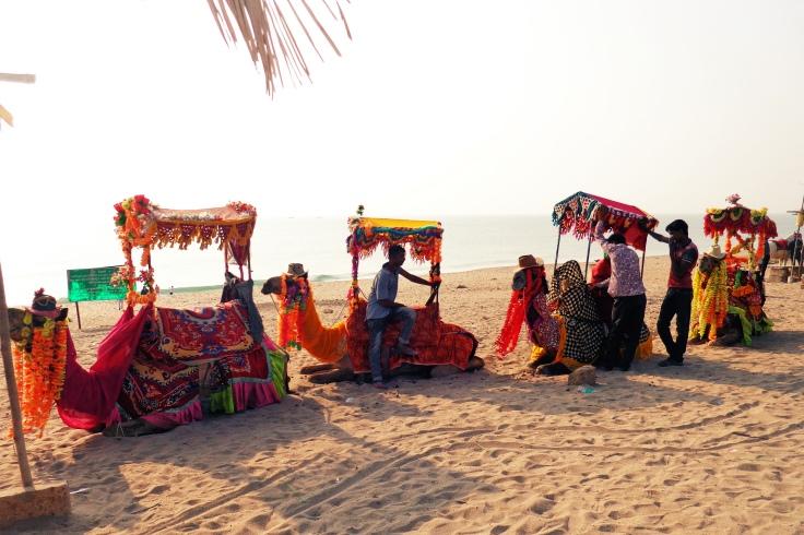 Gujarat Beaches Camel Ride