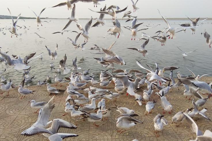 Birds at Triveni Sangam