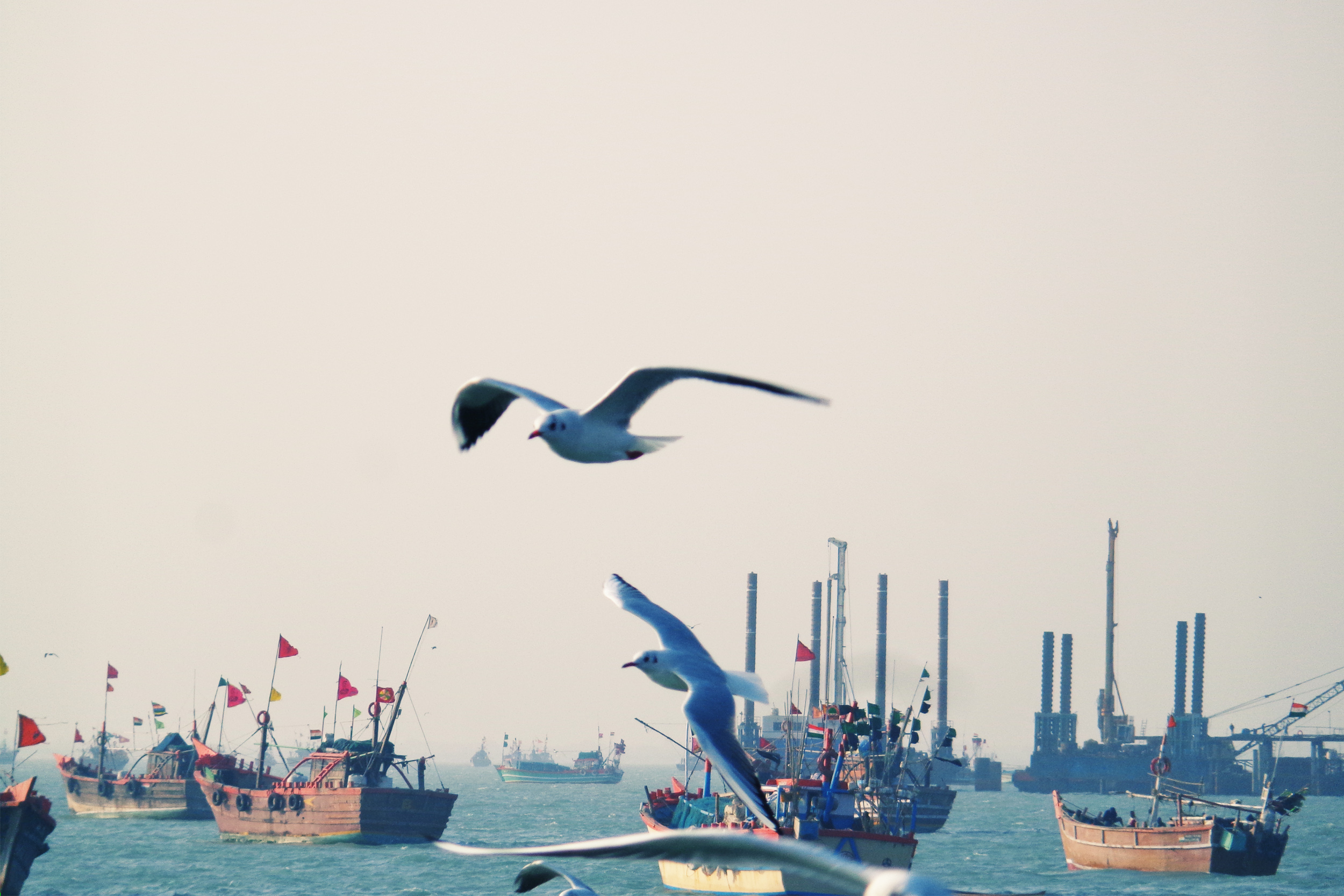 Birds at Okha Port