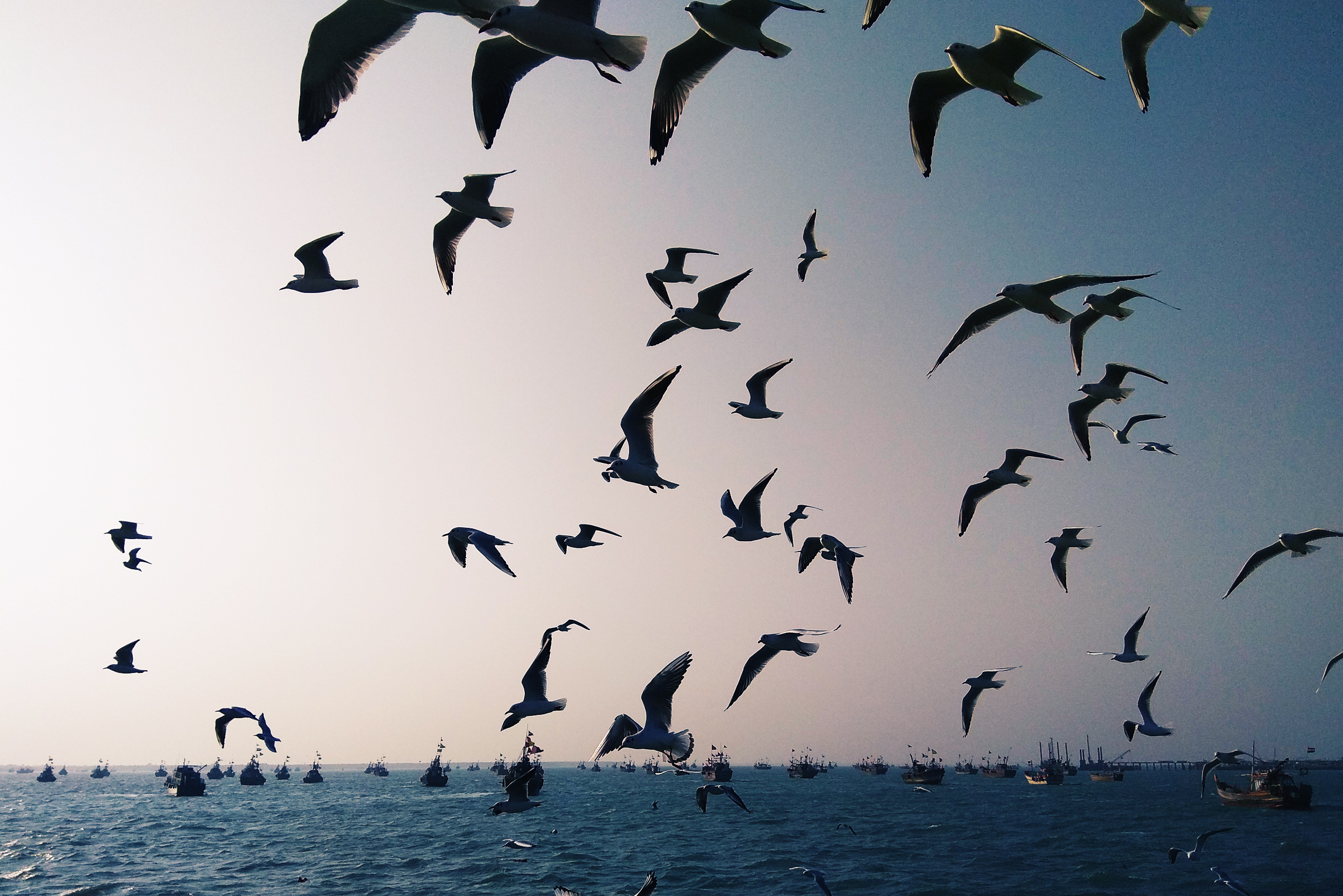 Birds at Okha Port Bet Dwarka